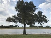 Beautiful 50 Acres W/ Lake : Brashear : Hopkins County : Texas