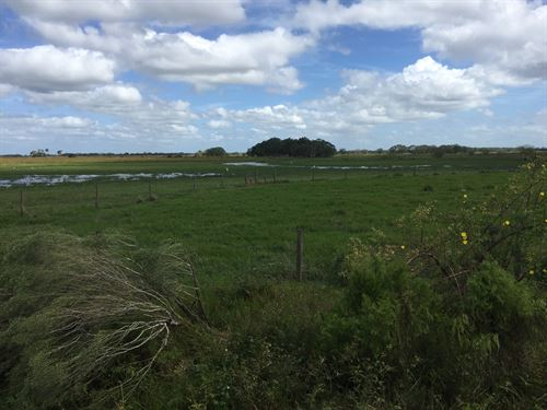 1495 Acres Improved Pasture : Arcadia : De Soto County : Florida