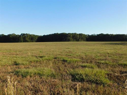 30 Acres Of Open Land : O'brien : Suwannee County : Florida