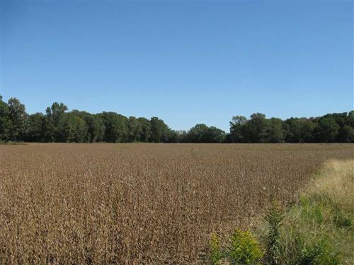 96 Acres of Irrigated Farmland : Colt : Saint Francis County : Arkansas
