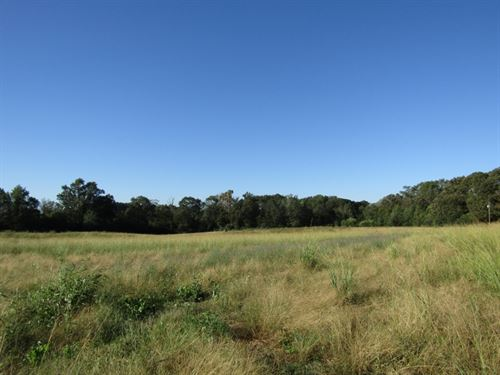 68 Acres In Scott County, Ms : Walnut Grove : Scott County : Mississippi