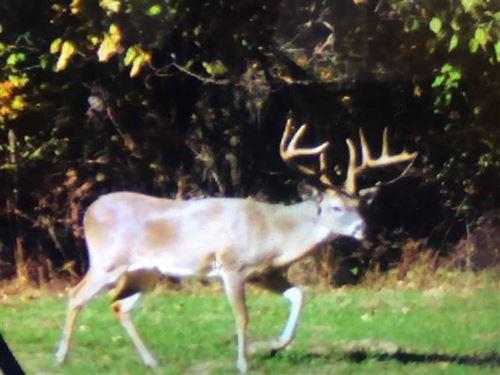 Tuppen Tract, Big Bucks & Ducks : Clarksville : Red River County : Texas