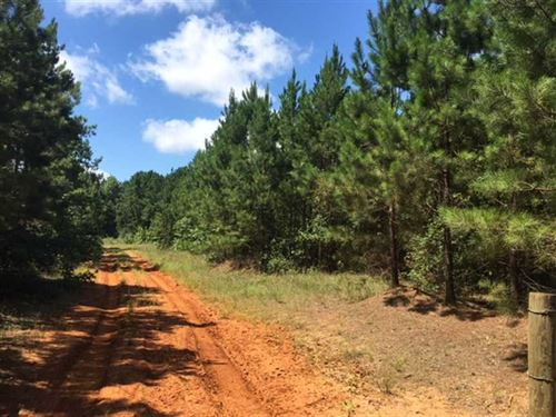 108 Acre Tract of Managed Pine Pla : San Augustine : Texas