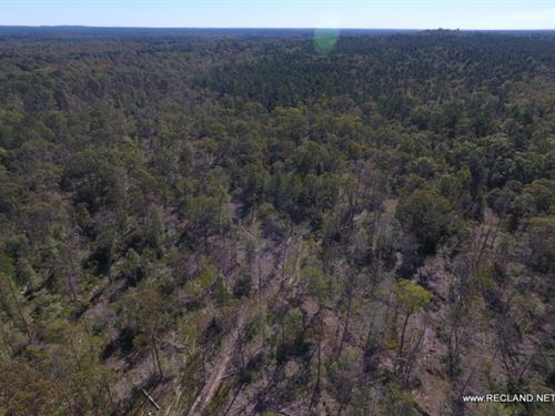 64.9 Ac - Wooded Tract For Rural Ho : Jasper : Texas