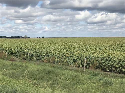 Farm & Ranch Land - 640 Acres : Faulkton : Faulk County : South Dakota