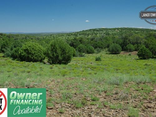 Amazing 40 Acre Treed Property Back : Seligman : Yavapai County : Arizona