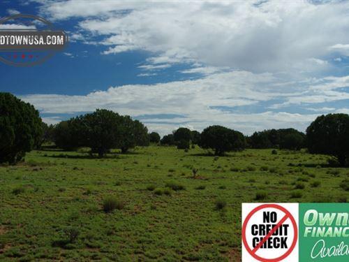 Beautiful Treed 20 Acre Property Nw : Seligman : Yavapai County : Arizona