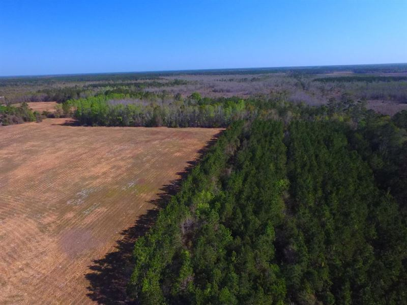 Perfect Homesite In Long County : Ludowici : Long County : Georgia