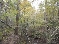 Secluded Hunting Tract : Morton : Smith County : Mississippi