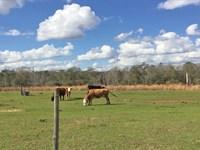Beall Packing Road 68 Tract : Bonifay : Holmes County : Florida