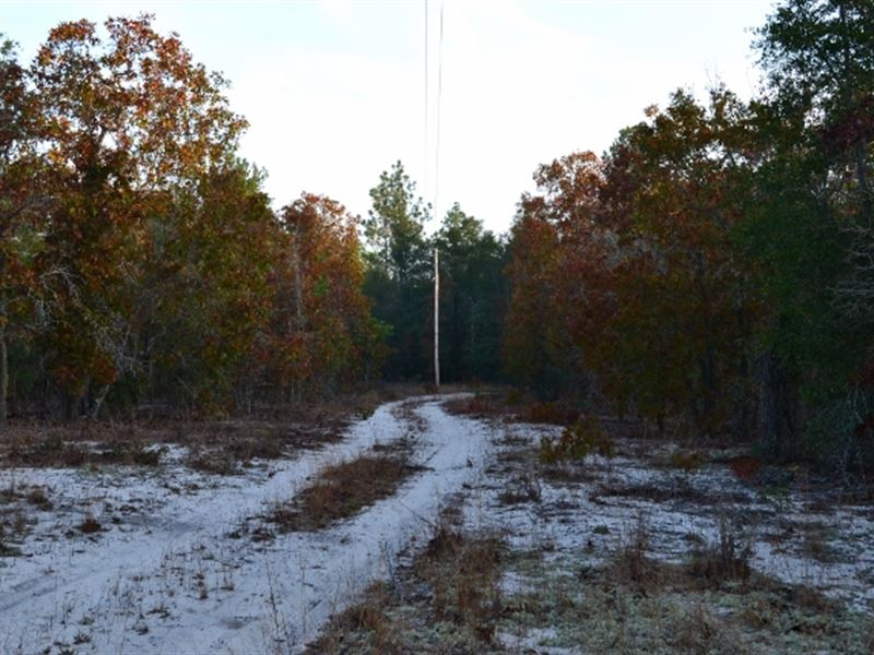 99 Acres Hwy 56 Ranch For Sale Swainsboro Emanuel County