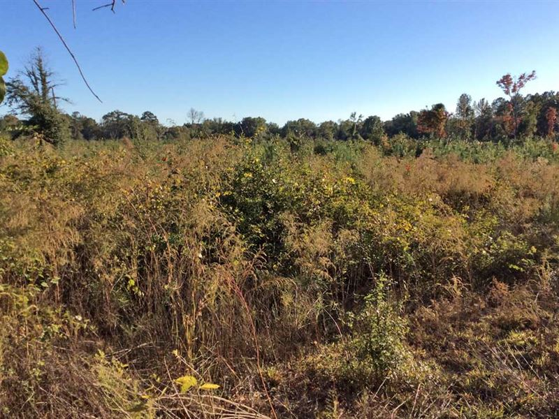 Hill Chaudron Drive 14 Ac : Greenville : Butler County : Alabama