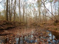 Rush Creek Hunting Tract : Eatonton : Putnam County : Georgia