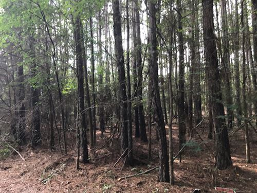 Wooded Home Site Near Town : Jackson : Butts County : Georgia