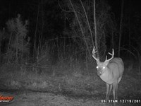 Beautiful Timber Creek And Hunting : Monticello : Jefferson County : Florida