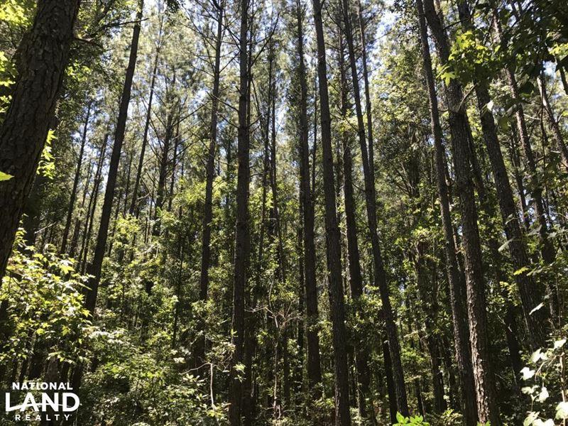 Ridgeland Sardis 22 Ac, Homesite/Re : Ridgeland : Jasper County : South Carolina