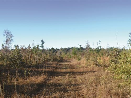 Recreational, Hunting & Timber Prop : Spencerville : Choctaw County : Oklahoma