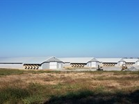 Four House Breeder Farm : Gainesville : Sumter County : Alabama