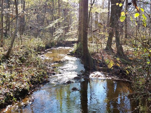 12+/- Acres In Tnf : Ashland : Clay County : Alabama