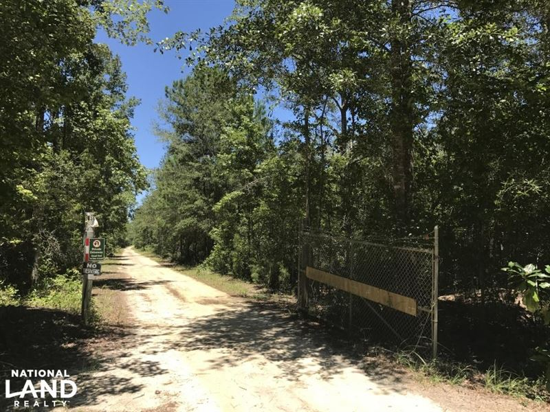 Ridgeland Sardis Road 44 Ac, Estate : Ridgeland : Jasper County : South Carolina