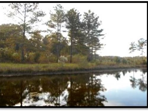 63 Acres Out Of Springwater Ranch : Brandon : Rankin County : Mississippi
