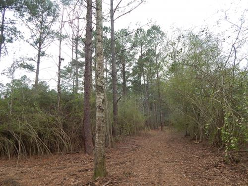 28.52 Acres Of Mature Pine Timber : Magnolia : Pike County : Mississippi