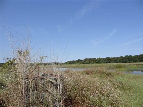 63.34 Acres Wre Duck Hunting : Cotton Plant : Woodruff County : Arkansas