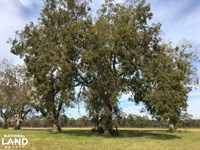Wild Rose Country Estate : Williston : Barnwell County : South Carolina