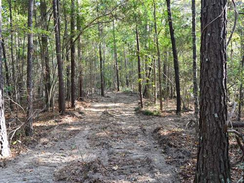 60 Acres Hunting And Timber Land : Harrisville : Simpson County : Mississippi