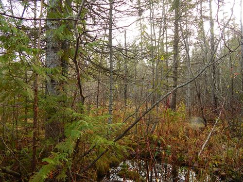 Prime Hunting Land In U.P. : Newberry : Luce County : Michigan