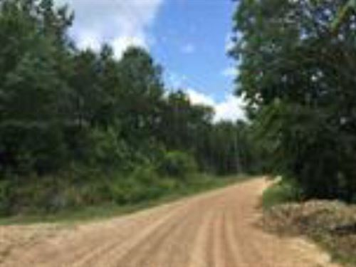 332 Ac On Cold Springs Road In Wood : Woodville : Wilkinson County : Mississippi