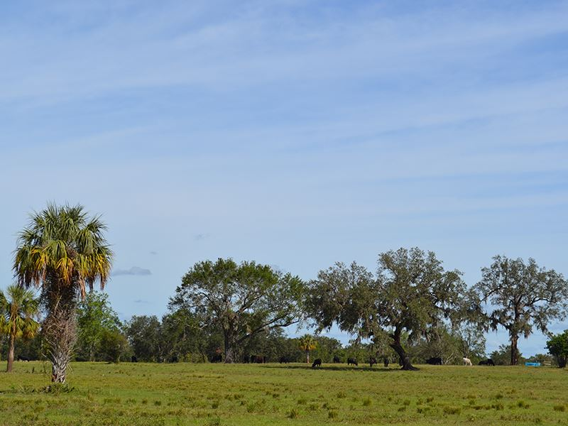 Highway 17 Ranch Ranch For Sale Arcadia De Soto