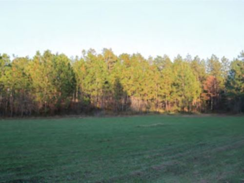 784 Acres In Lamar County, Ms : Purvis : Lamar County : Mississippi