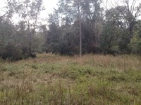 15 Wooded Acres East Of Gainesville : Waldo : Alachua County : Florida
