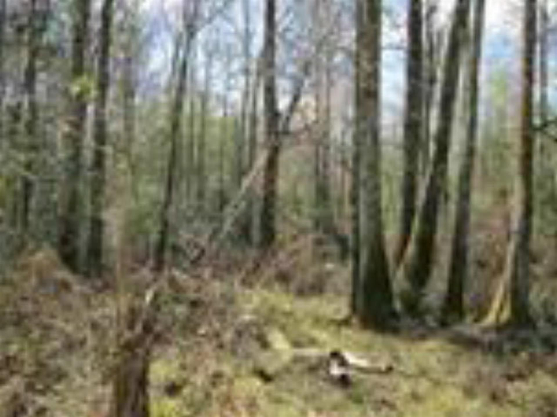 Great Wood Duck Hunting Land Ranch For Sale Summit Pike County