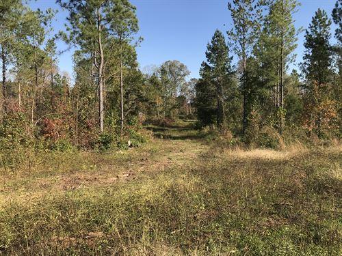 46+/- Acres Located On Highway 11 : Campobello : Cherokee County : South Carolina