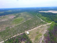 Timberland Tract In Toombs County : Cedar Crossing : Toombs County : Georgia