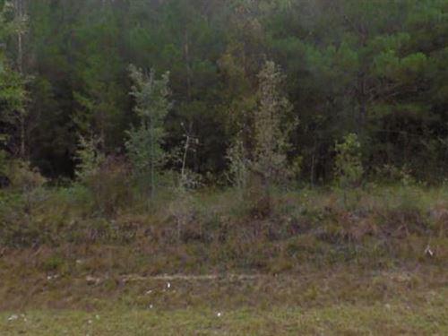 Hamilton County, Fl $255,000 Neg : Jasper : Hamilton County : Florida