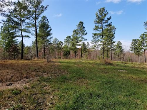 36+/-Acre Hunting Land Near Sewanee : South Pittsburg : Marion County : Tennessee