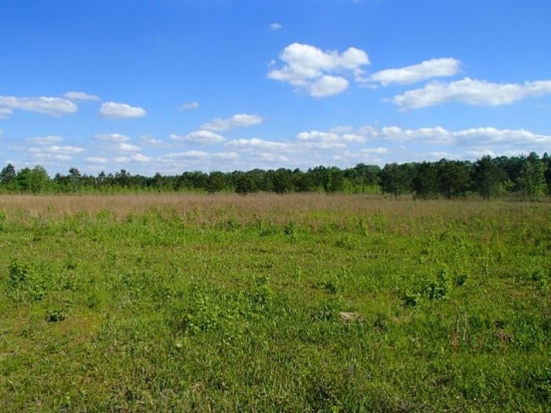 100 Acres In Oktibbeha County In St : Starkville : Oktibbeha County : Mississippi