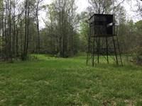 140 Ac - Hunting Tract Near Tensas : Newellton : Tensas Parish : Louisiana
