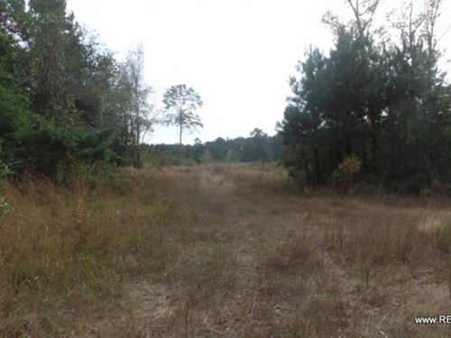 60.3 Ac - Wooded Tract For Home Sit : Kirbyville : Jasper County : Texas
