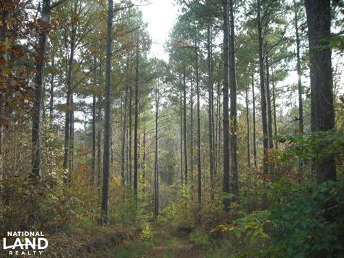 Blue Road Timber Tract 150 Acres : Tallapoosa : Haralson County : Georgia