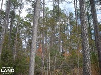 Judd Road Timber Tract 32 Acres : Buchanan : Haralson County : Georgia