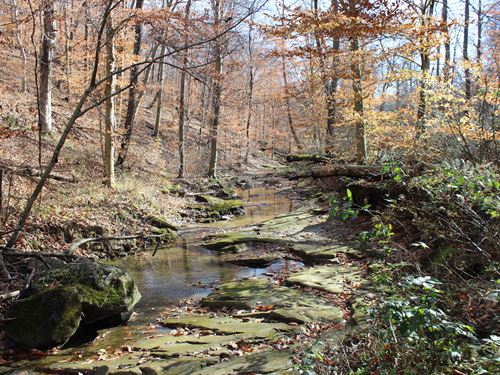 Ford Rd - 56 Acres : Mount Perry : Muskingum County : Ohio