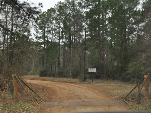 311 Acres Tract 4173 : Carthage : Panola County : Texas