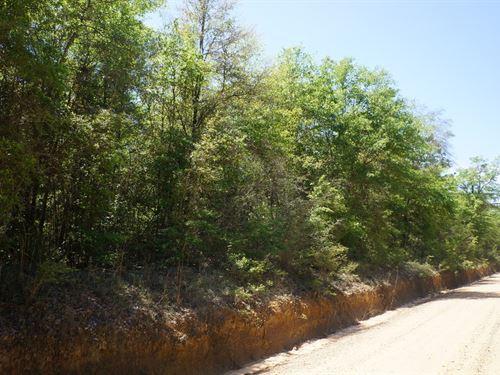 85 Acre Hunting Tract In Bonifay : Bonifay : Holmes County : Florida