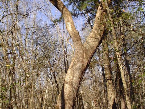 Burr Hill Tract : Walterboro : Colleton County : South Carolina