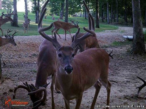 204 Acre Retreat With Large Custom : Doniphan : Ripley County : Missouri