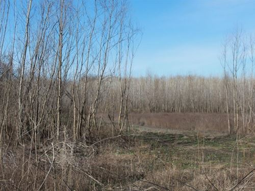 Duck Hunting Property In Elsberry : Elsberry : Pike County : Missouri